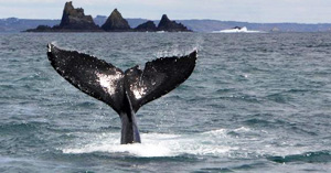 Whale Watching in Cork Ireland